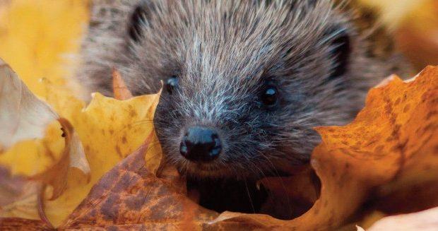 Essex Wildlife Appeal